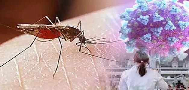 चीन और अमेरिका के वैज्ञानिकों ने मिलकर किया रिसर्च, मच्छर के बैक्टीरिया से हो सकता है कोरोना खत्म