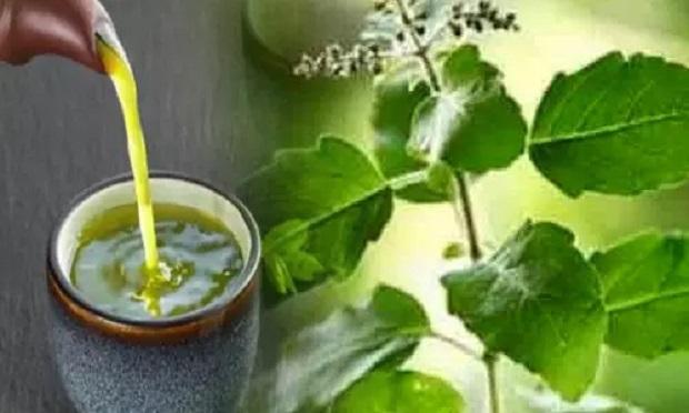 घटाना चाहते हैं पेट की चर्बी तो ऐसे बनाकर पीएं तुलसी की चाय, हफ्तेभर में दिखने लगेगा असर