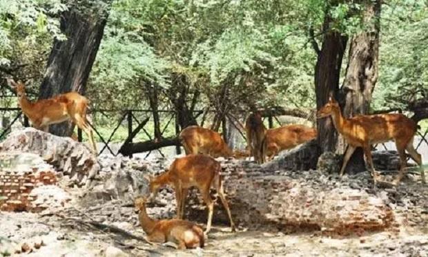 रायपुर के बाद कवर्धा में भी जंगल सफारी, सरगुजा-रायगढ़ में जू का प्रस्ताव