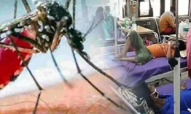 कोरोना के बाद हरियाणा में जहरीला हुआ डेंगू का डंक, अब तक 70 की मौत